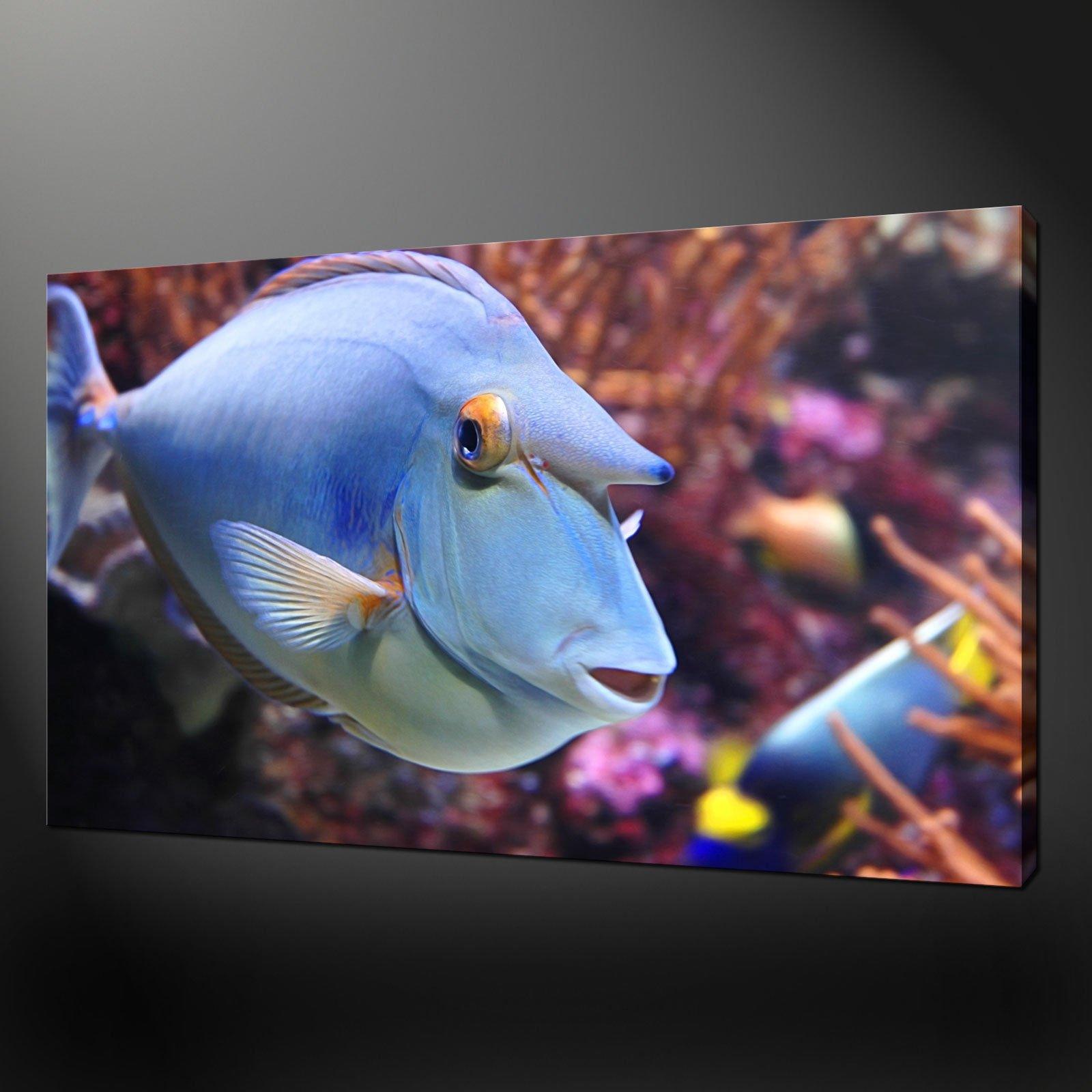 Freshwater aquarium fish uk -  Tropical Fish Modern Design Poster Picture Canvas Print